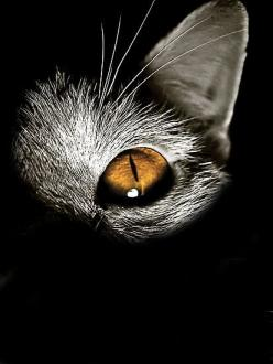 perfect Halloween invite image -- print on the bottom with white ink: Animals, Cat Eyes, Kitty Kitty, Photo, Black Cat
