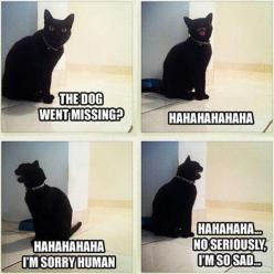 pictures of funny animals with captions   animal pictures with captions, lolcats, dog went missing: Cats, Animals, Dogs, Funny Cat, Funny Stuff, Funnies, Humor, Funny Animal