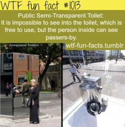 public semi-transparent toilet  MORE OF WTF-FUN-FACTS are coming HERE funny and weird facts ONLY: Wtf Fun Fact, Wtffunfacts Seriously, Wtffunfacts Creepy Scary, Crazy Facts Creepy, Wtffunfacts Scary, Interesting Facts, Wtffunfacts Funny, Wtffunfacts Weird