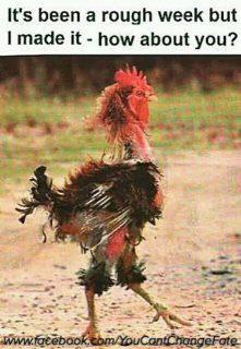 Rough week?....aaaawwwww POOR old man... Ihope this isn't a real chicken??? Looks like it. They need to fix the poor thing......OUCHY OUCH OUCH....PLEASE TELL ME THIS ISN'T REAL...