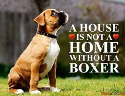 So true! #dogs #pets #Boxers Facebook.com/sodoggonefunny www.ALocket2Love.OrigamiOwl.com: Animals, Boxer Dogs, Boxers Dogs, Pets Boxers, Dogs Pets, House, Beautiful Boxers, Homes