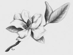 Southern Magnolia Drawing  - Southern Magnolia Fine Art Print: Magnolias, Magnolia Drawing, Art Prints, Google Search, Fine Art, Greeting Card, Magnolia Tattoo Ideas, Ink
