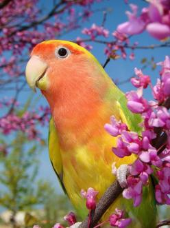 The kind of bird I'd like to have,these little guys are soo cute!: Colorful Birds, Animals, Lovely Lovebird, Google, Parrots, Beautiful Birds, Photo, Love Bird
