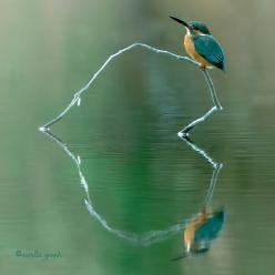 The most amazing nature photography I think I have ever seen - follow @vanilla_graph !: Reflection, Animals, Nature, Beautiful, Kingfisher, Birds, Natural Heart, Photo