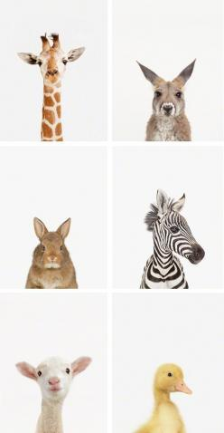 These would be so adorable for a nursery or kids room. Love love love the simplicity of them.: Nursery Printable, Baby Animal Print, Animal Printable, Art For Kids Room, Baby Room, Animal Prints, Baby Printable, Kid Room