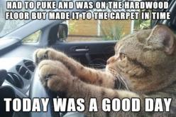 This Is My Cat: Cats, Animals, Funny Cat, Funny Stuff, Funnies, Humor, Kitty