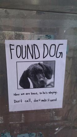 Too funny: Don T Call, Giggle, Dogs, Funny Stuff, Funnies, Humor, Weird, Animal