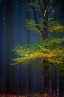 Tree and forest, Germany - David Pinzer. Indigo, leaf green and yellow = winning combination.: Nature, Wood, Beautiful Trees, Color, Forest, Beauty, Photo