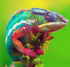Wonderful world of color. Visit https://www.facebook.com/LadyGadgetOnline for more incredible gadgets every day.: Colour, Animals, Chameleons, Nature, Creature, Colors, Rainbows, Art, Colorful Lizard