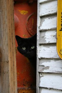"""""""Cats like doors left open, in case they change their minds."""" --Rosemary Nisbet: Peep, Animals, Black Kitty, Chat Noir, Black Cats, Blackcats, Photo"""