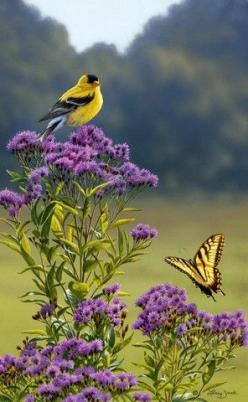 """Goldfinch on Ironweed"" (by artist Larry Zack: Google, Butterflies, Yellow Butterfly, American Goldfinch, Beautiful Birds, Garden, Flower, Animal"