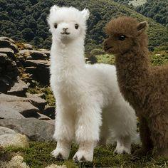 awkward and adorable: Animals, Stuff, Funny, Adorable, Baby Alpaca, Shaved Llamas, Things, Shaved Alpacas, Sheared Alpacas