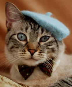 Bonjour, mes amis, bonjour: Kitty Cats, Kitten, French Cat, Animals, Kitty Kitty, Beret, Kitties, Has