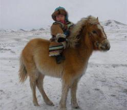 Brought to you by Cookies In Bloom and Hannah's Caramel Apples   www.cookiesinbloom.com   www.hannahscaramelapples.com: Animals, Horses, Ponies, Mongolia, Children, Baby, Kids, People, Photo