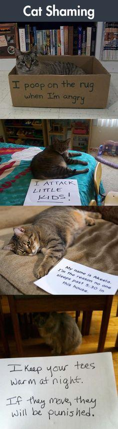 Cat Shaming: Some Of Them Look So Proud: Cats, Funny Animal Picture, Cat Face, Funny Cat, Shaming Cat, Funnies 02A, Cat Stuff, Random Funnies, Cat Shaming Photos Hilarious