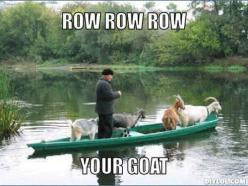 Community: 14 Goat Quotes For Every Occasion: Funny Goat Quotes, Animals, Boat Quotes Funny, Goats Funny Quotes, Funny Goats Memes, Stuff, Humor, Row Row
