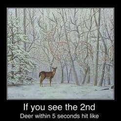 Do you see it deer in tree: Picture, Animals, Optical Illusions, Stuff, Art, 2Nd Deer, Funny, Second Deer