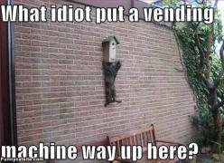 funny: Funny Kitty, Funny Animals, Vending Machine, Cute Cats, Funny Laughed, Funny Cats, Funnies, Silly Cat, Cats Big