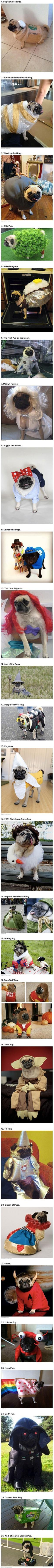 Ha! Several of these are past participants in the annual OHS Pug Crawl. :): Poor Pug, Pug Costumes, Giggle, Funny Dog Costume, Funny Pugs, Pug Life, Funny Dog Halloween Costumes, Animal