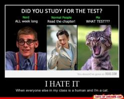 Happens to me all the te! -Emma: Cat, Life, Test, Funny Stuff, True, Funnies, Humor, Things