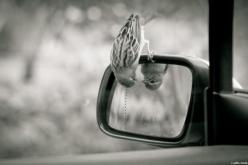 Hehe, well hi there!: Picture, Mirror, Photos, Animals, Reflection, Things, Birds, Photography