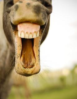 Horse Photo - Smile Pretty: Dental Humor, Farm Horses Trailer, Horses 3, Horse Smiles, Horses Are, Dental Office, Horse Memes, Horse Photos, Animals Horses