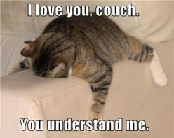 I feel the same way sometimes...: Cats, Animals, Couch, Funny Stuff, Funnies, Humor, Things, Smile