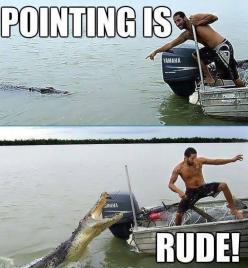I found this way too funny - this is what I think of every time I see people getting too close to dangerous animals...: Giggle, Alligator, Funny Picture, Funny Stuff, Funnies, Humor, Animal