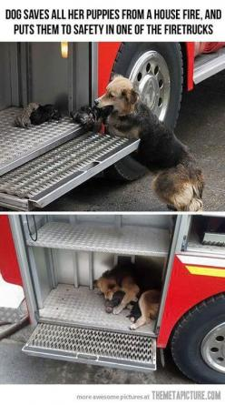 I really hope this dog and her puppies were fine after this happened.: Animals, Dogs, Mothers, House Fire, Fire Trucks, Dog Saves, Puppys, Firetruck, Mom