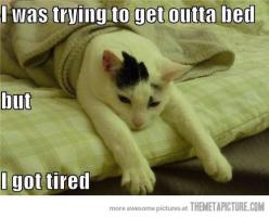 I was trying to get outta bed but I got tired.: Cats, Animals, Bed, Tired, Funny Stuff, Humor, Funny Animal, Morning