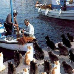 Kitties in a Greek port, patiently waiting for treats from the fishermen: Cats, Dinner, Animals, Fish, Pet, Funny, Kitty, Photo