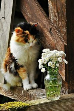Like a graceful vase, a cat, even when motionless, seems to flow.     —George F. Will (b. 1941, US writer & Journalist): Beautiful Cat, Kitty Cats, Kitten, Animals, Kitty Kitty, Calico Cats, Pretty Kitty