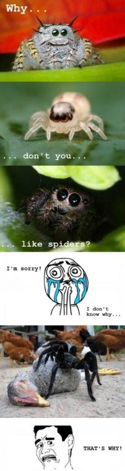 LOL! Personally I like (most) spiders<<<<< I really don't mind spiders I think they're pretty cool: Animals, Funny Pictures, Funny Stuff, Nope Nope, Don T, Things, Spider Meme, Hate Spiders