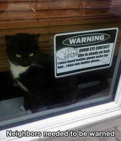 Lolcats - Lolcats n' Funny Cat Pictures - funny cat pictures - Cheezburger: Cats, Animals, Funny Cat, Pet, Crazy Cat, Funnies, Funny Animal, Kitty, Cat Lady