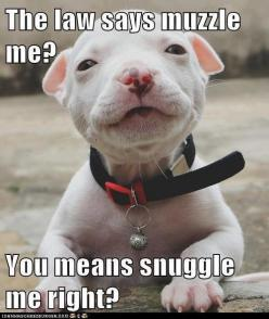 look at that face! never muzzle!: Animals, Dogs, Snuggle, Pet, Puppy, Baby
