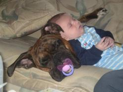 Love is having someone hold your binky while you sleep!  Love it: Animals, Dogs, Boxer, Pets, Funny, Kids, Baby, Friend