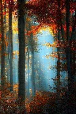 Magical Forest...: Forests, Color, Autumn, Fall, Beautiful, Trees, Beauty, Nature S, Photo