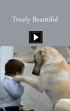 No words are necessary-This is a beautiful video showing a dog and a little boy with Downs Syndrome interacting.  Priceless! https://www.youtube.com/watch?v=JA8VJh0UJtg#