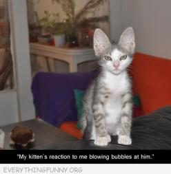 Ok I don't usually pin cat pictures (I'm more of a dog shaming kinda gal) but this cracked me up :): Animals, Kitten S Reaction, Funny Cats, Funnies, Blowing Bubbles, Funny Animal, Kittens, Kitties, Kitty