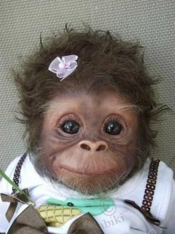 okay yes its true I am TERRIFIED of chimps, i think they are killing machines but this little thing LOOKS cute.: Face, Babies, Animals, Pet, Funny, Baby Monkeys, Adorable, Box, Things