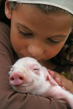 piggy...oh, my...look at that sweet, happy piggy face! <3: Piggie, Animals, Friends, Pet, Baby Pigs, Children, Piggy, Piglet, Kid