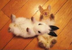 Plz like, comment or repin my stuff:) it would be appreciated . follow me www.instagram.com/rockstarking << Bunny pillow: Rabbit, Cuteness Overload, Animals, Baby Bunnies, Adorable, Things, Bun Buns, Friend