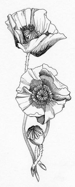 poppies ...  signifies a promise of resurrection after death, from Robert Graves: The Greek Myths: Tattoo Ideas, Poppies Tattoo, Flowers Drawing, Tattoo Inspiration, Flower Sketch