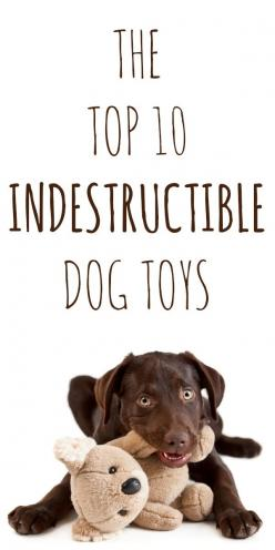 Pretty sure my dog could still destroy these...The Top 10 Truly Indestructible Dog Toys - tried and true: Destroy These The, Top 10, Toys For Dog, Gift Ideas For Dog, Dog Toys, Indestructible Dog Toy, Indestructable Dog Toy, Toys Dog