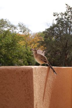 Roadrunner .... Mip ! Mip !: Decor, Favorite Places, Adobe Doors, Mexico, Southwest, High Desert, Usa