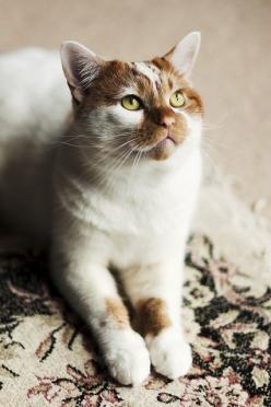 Savage the cat.  The only cat with enough balls to live among twenty eight dogs without an ounce of fear.  Pretty sure this cat is made up entirely of grit and steel...he is one of the best mousers known in the feline world, and his image strikes fear in