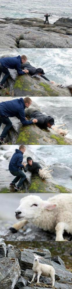 saving an animal: Picture, Animal Rescue, Norwegian Guys, Hero, The Ocean, Faith In Humanity Restored, Sheep, Guys Rescuing, People