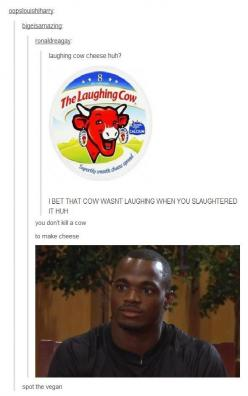 Spot the vegan more funny pics on facebook: https://www.facebook.com/yourfunnypics101: Vegan Tumblr Funny, Giggle, Funny Pics, Vegans, Funny Stuff, Cow, Humor, Cheese