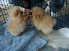 They're so fluffy I'm gonna die!