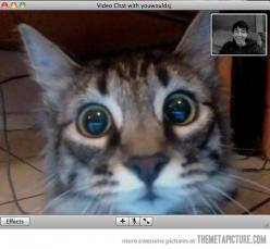 This is awesome, lol: The cat's face when he saw his owner on video chat.: Cats, Animals, Funny, Cat Faces, Kitty